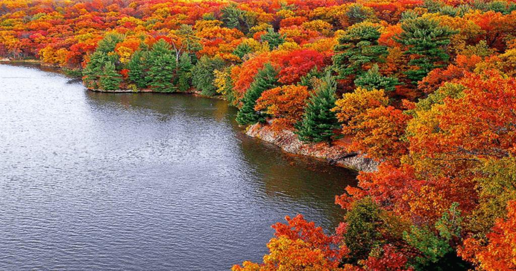 fall-trees-3
